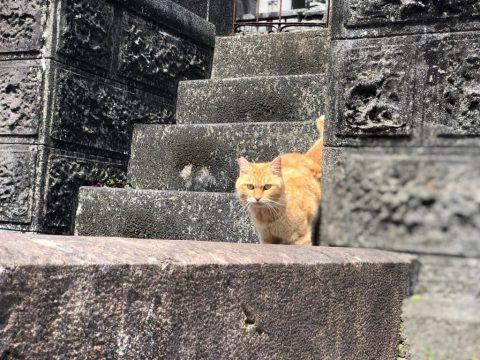 長崎 ねこ シンパシー